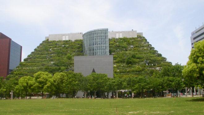 Растения в  биоклиматическом здании.